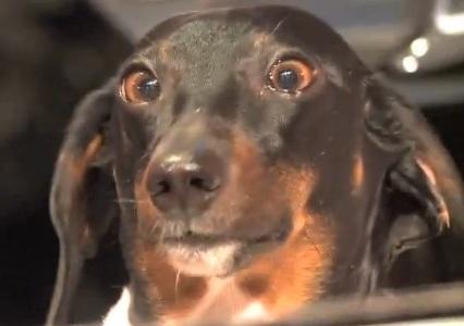 Terri Clark's dog