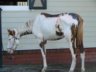 Willie nelson abused horse