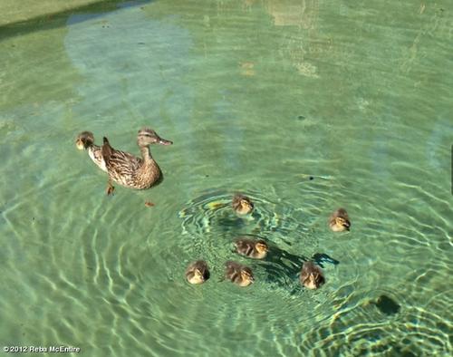 Reba duck invaders