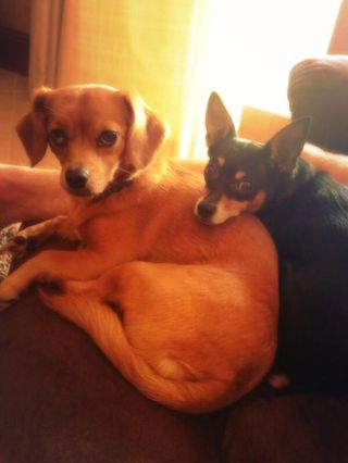 Penny and ace