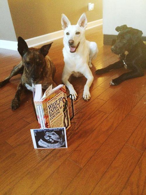 Mallary Hope dogs and ultrasound