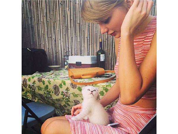 Taylor Swift kitten Instagram