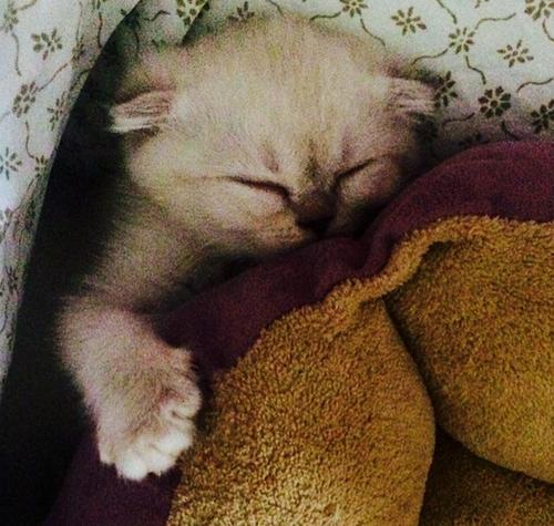 Taylor Swift kitten